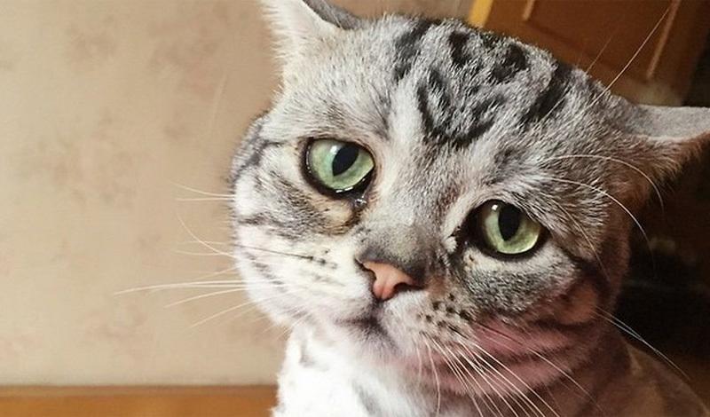 картинка котенка в слезах добавлять темные детали