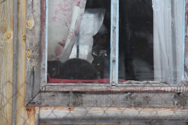 podglyadivanie-v-okna-za-zhenshinami-video