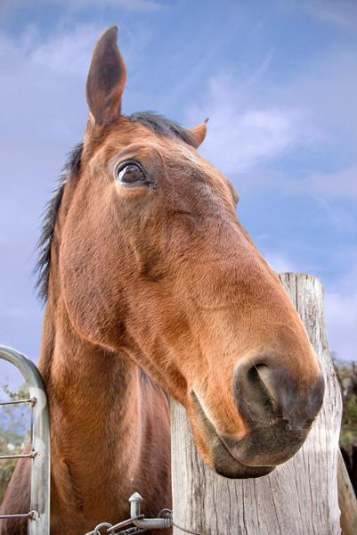 Спокойной, картинки прикол лошади