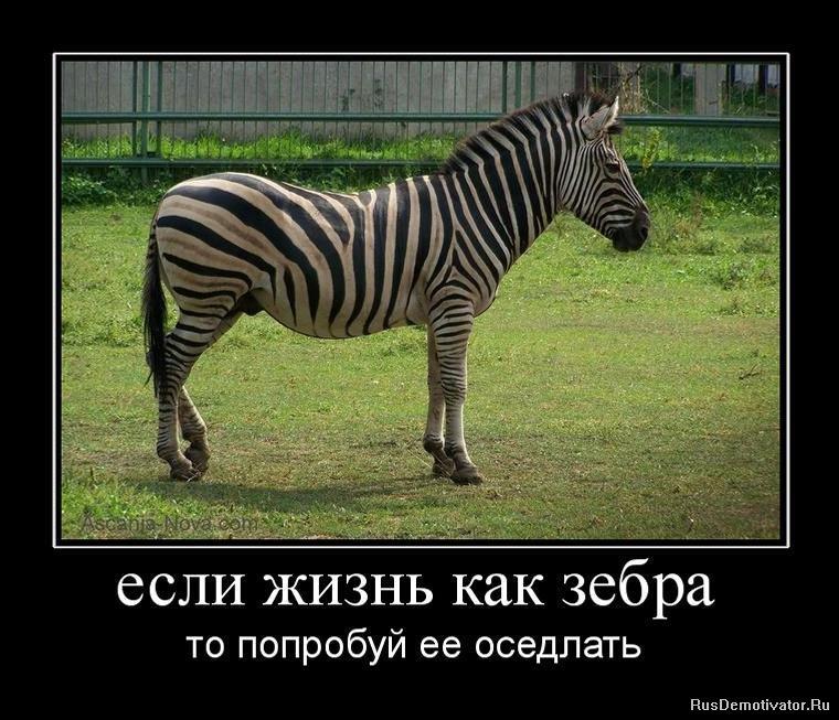 демотиватор с зеброй многие сейчас вспоминают
