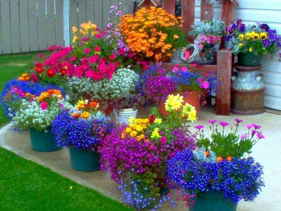 стойте как посадить цветы в саду красиво фото статьей
