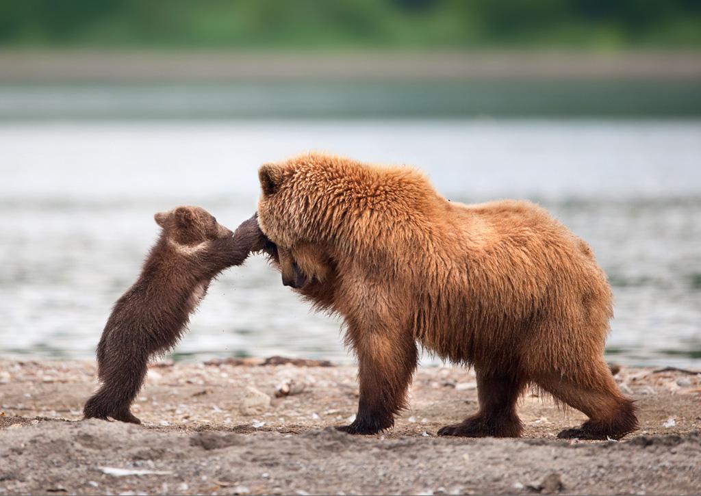очень прикольное необычное фото медвежат здесь